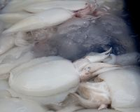 Fresh squid sold in the market. White raw squid seafood or fresh squid display for sale at wet market for cooking in seafood or other menu stock photos