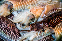 Fresh squid tray Royalty Free Stock Images