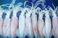 Fresh squid - in the tray Royalty Free Stock Photos