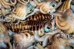 Fresh squid tray Royalty Free Stock Photography
