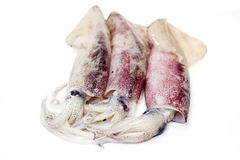 Fresh squid on white background Royalty Free Stock Image