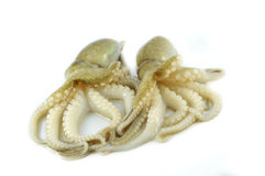 Fresh squid Stock Photography