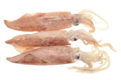 Fresh Squids Royalty Free Stock Photography