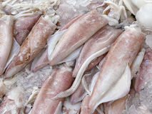 Fresh squids display in the basket Stock Image