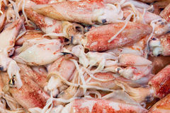Fresh squids at a fish market Royalty Free Stock Photos