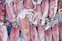 Fresh squids Royalty Free Stock Photo