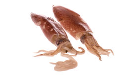 Fresh Squids Isolated Stock Photos