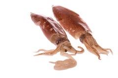 Fresh Squids Isolated Stock Photos