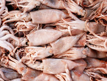 Fresh squids at the local market Royalty Free Stock Photos