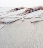 Fresh squids on wooden table Stock Images