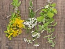 Fresh St John's wort, coriander and rosemary Royalty Free Stock Image