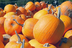 FRESH, STACKED PUMPKINS ON A WOODEN WAGON Royalty Free Stock Photo