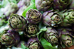 Fresh staple artichokes sold at an Italian market Royalty Free Stock Photos