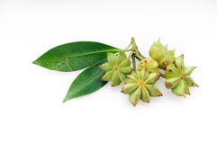 Fresh star anise Stock Photo