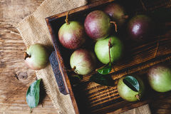 Fresh Starapples Royalty Free Stock Photo