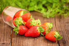 Fresh stawberries Stock Images
