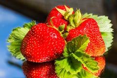 Fresh stawberry Stock Photos