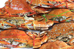 Fresh steamed crab. Ready to eat fresh steamed crab Royalty Free Stock Photos