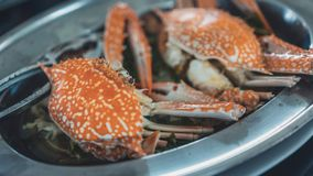 Fresh steamed crabs or crab legs royalty free stock images