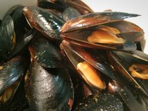 Fresh steamed mussels. Cracked open Royalty Free Stock Images