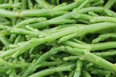Fresh stems of Samphire Stock Photography