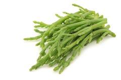 Fresh stems of Samphire. Fresh stems of semphire on a white background Stock Photos