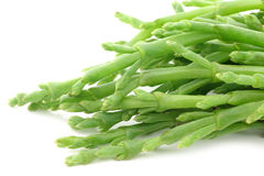 Fresh stems of Samphire Royalty Free Stock Photo