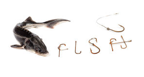 Fresh sterlet and word F I S H composed of old rusty fish hooks. Isolated on white background Stock Photography