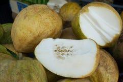 Fresh strange fruits Yemenite citron Royalty Free Stock Photo