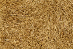 Fresh Straw closeup Royalty Free Stock Images