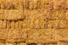 Fresh straw hay bales background Royalty Free Stock Image