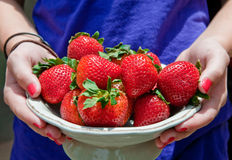 Fresh Strawberries Stock Photos