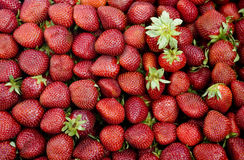 Fresh strawberries Stock Photo