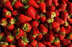 Free Fresh Strawberries Stock Photography - 2300232