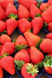 Fresh strawberries stock photos