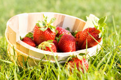 Fresh Strawberries Royalty Free Stock Image