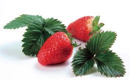 Fresh strawberries Royalty Free Stock Photos
