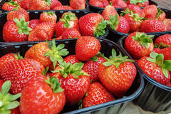Strawberry fruits in boxes Royalty Free Stock Photography