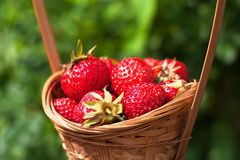 Fresh strawberries in a basket Royalty Free Stock Photos