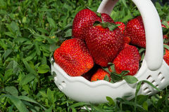 Fresh strawberries in basket Stock Images