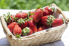 Fresh strawberries in basket. Fresh strawberries with green tails wickerwork basket with white napkin stock images