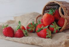 Fresh Strawberries in a Basket. Horizontal image of strawberries tumbling from a basket onto a burlap cloth laying on a rustic wooden table stock images