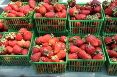 Fresh strawberries. In basket for sale Royalty Free Stock Photos