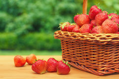 Fresh strawberries in a basket on wooden table in garden Stock Photos