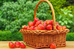 Fresh strawberries in a basket on wooden table in garden Stock Images