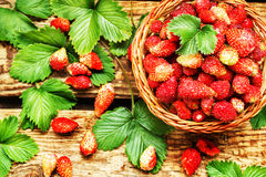 Fresh strawberries in a basket on wooden table with green laves Royalty Free Stock Photos