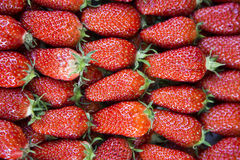 Fresh Strawberries. Big and delicious fresh red strawberries Stock Photos