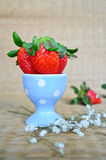 Fresh strawberries in a blue cup Royalty Free Stock Photos