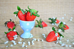 Fresh strawberries in a blue cup Stock Photos