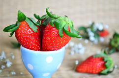 Fresh strawberries in a blue cup Stock Images